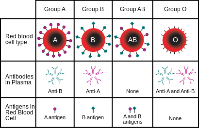 Understanding Your Blood Type And Group