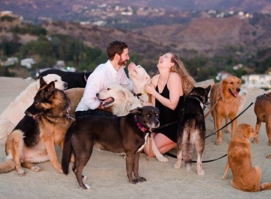 Man Proposes To His Girlfriend With 16 Dogs In Attendance